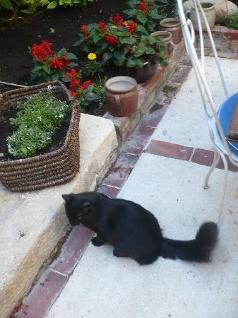 Hotel de Beaulieu : Le chat de l'hôtel qui aime jouer à la balle