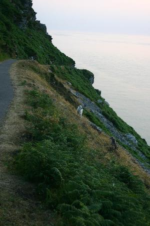 Lee House: Goats roam free in the Valley of the Rocks