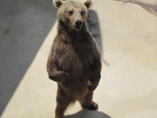Black Forest Bear Park and Reptile Exhibit: Bears