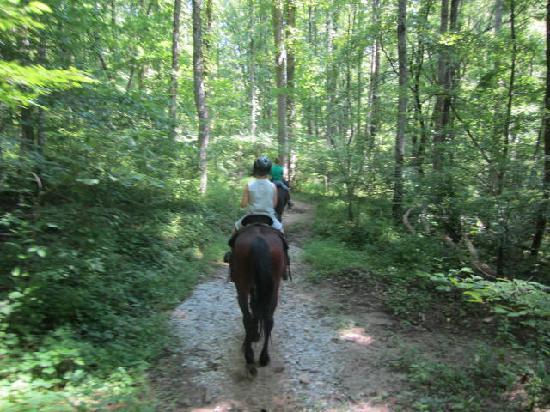 Smokemont Riding Stables : Up the mountain