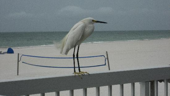 Mariner Beach Club: Visitors :)