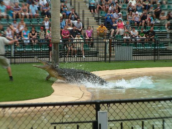 Australia Zoo : the Croc show