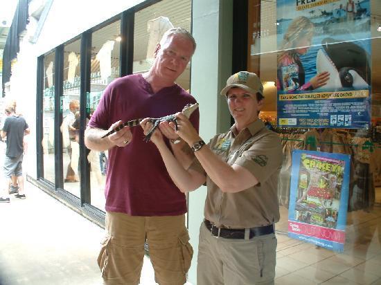 Australia Zoo : baby croc