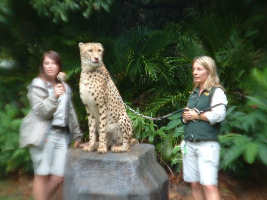 Australia Zoo : the big cats