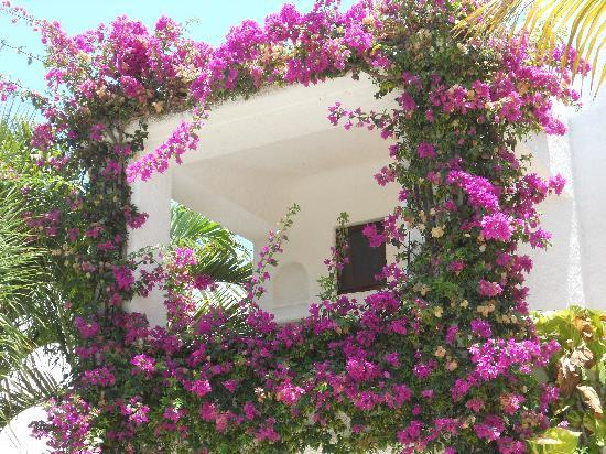 Amarte Hotel: Bougainvillea frame entrance to villa