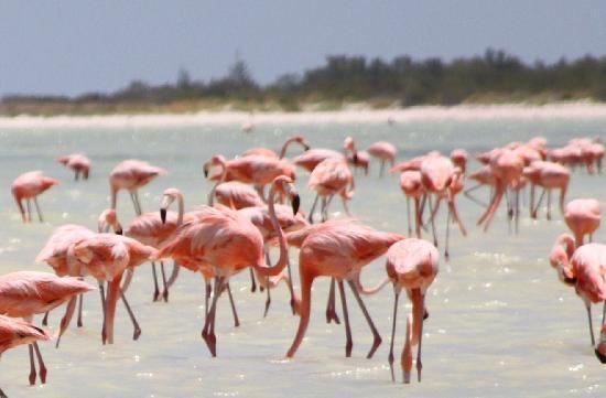 Остров Холбокс, Мексика: 1