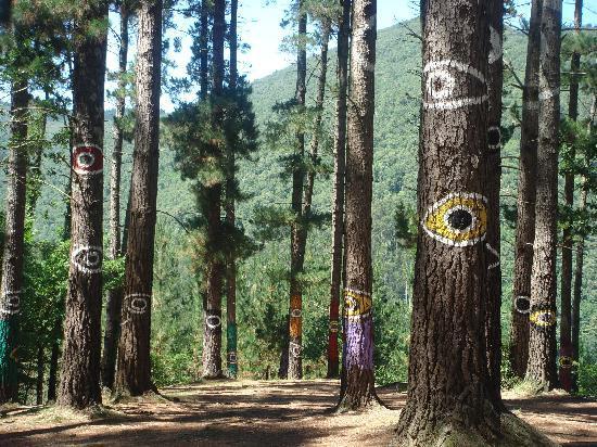 Ellauri Hotela: Muy cerca (Bosque de Oma)