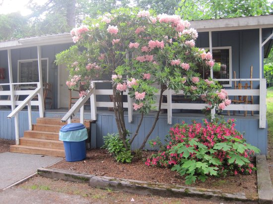 Lone Fir Resort: My room on the end - The rhodendrons were gorgeous!!