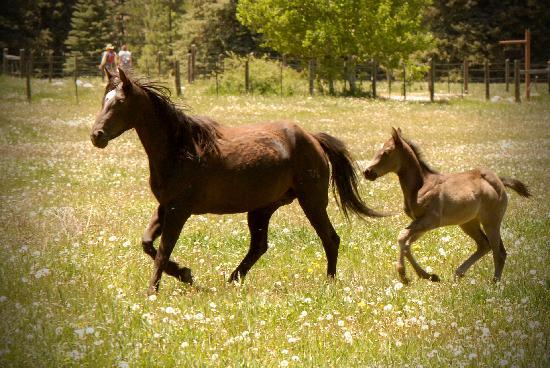 Wilderness Trails Ranch: horses on the ranch