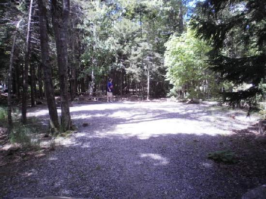 Blackwoods Campground: campsite