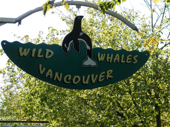 Wild Whales Vancouver : wehere to be