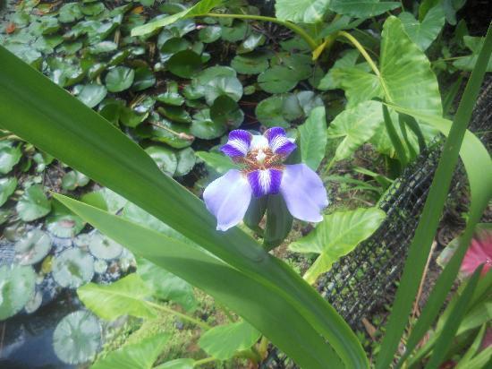Finca Los Monos Botanical Garden: Wonderful!