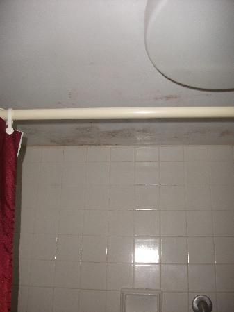 Downtown Erie Hotel: Moldy ceiling and wrinkled shower curtain