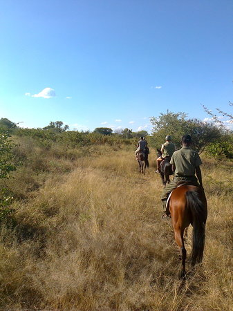 Zambesi Horse Trails - Day Tours