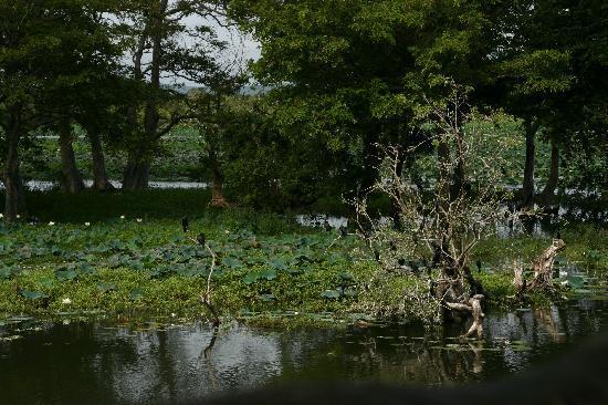 Cinnamon Lodge Habarana: Парк и озеро