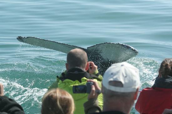 Catamaran Charters: Humpback Whale