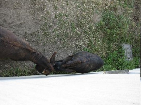 Ici M'aime : Local donkeys