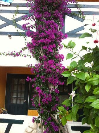 NOA Hotels Oludeniz Resort Hotel: Flowers growing up the side of the building