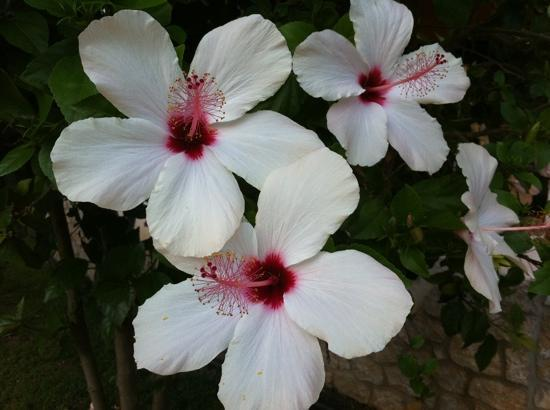 NOA Hotels Oludeniz Resort Hotel: flowers
