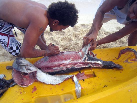 Taufua Beach Fales: Filleting the tuna for that night's dinner