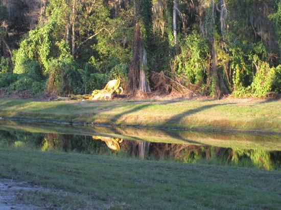 The Campsites at Disney's Fort Wilderness Resort: morning in the campground