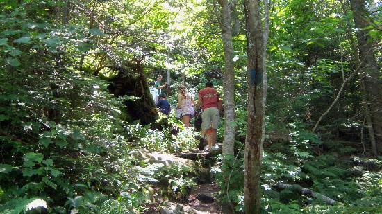 Healdville Trail: Heading up the mountain