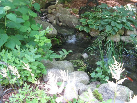 Cedar Creek Bed and Breakfast: Koi pond with frogs!
