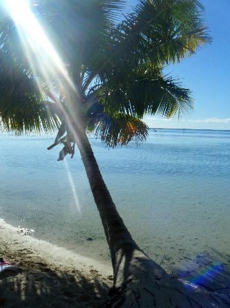 Hotel Les Tipaniers: palm tree on the beach