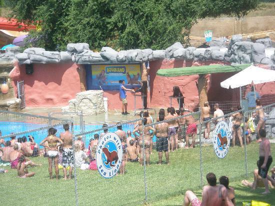 Aqualand Torremolinos: Seals