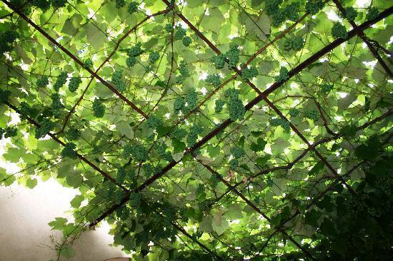 Casa Baldo B&B: Der Himmel hängt voller Trauben