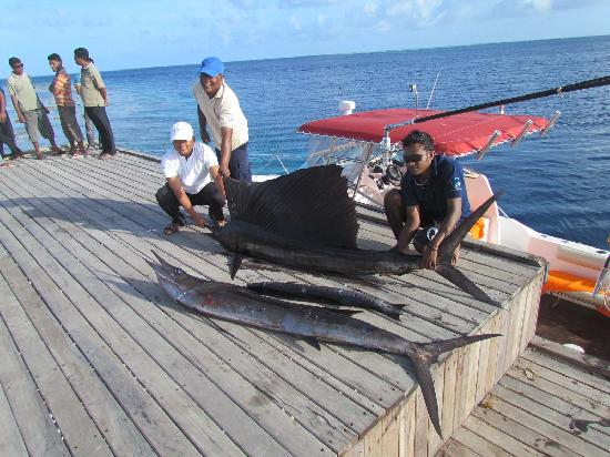 Dhevanafushi Maldives Luxury Resort Managed by AccorHotels: our catch from deep sea fishing