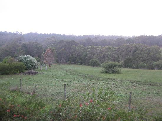 Hilltop Studios Margaret River: The View