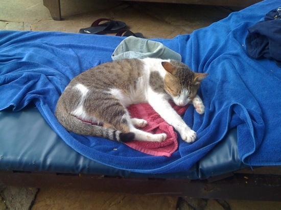 Diani Sea Resort: a resident cat, we named 'Bernie'