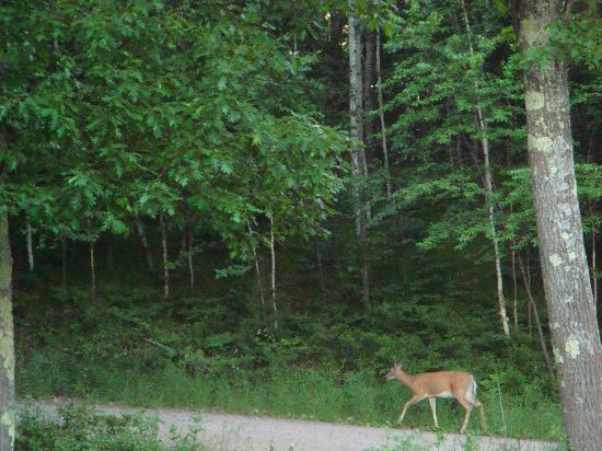 Telemark Resort & Convention Center: deer