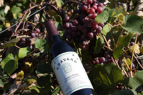 Tour Bravards Vineyard and Winery when in Hopkinsville