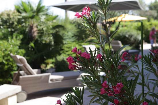 Les Terrasses du Luberon : Flowers on the terrace