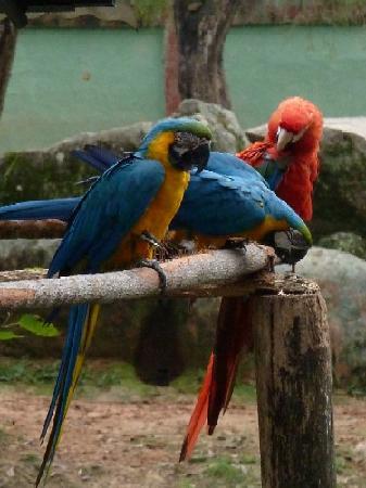 Zoo Pomerode: Araras