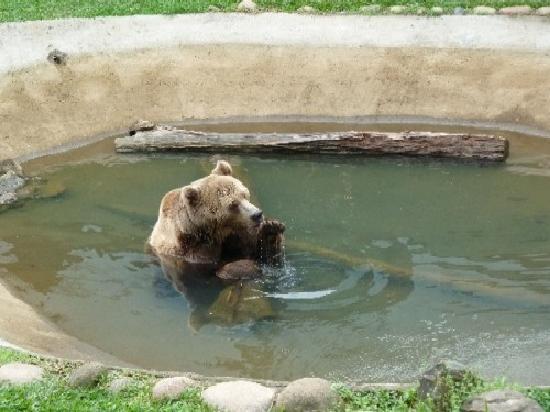 Zoo Pomerode: Bärenbad