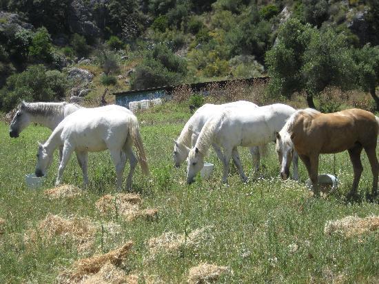 Rancho La Paz: Great horses!