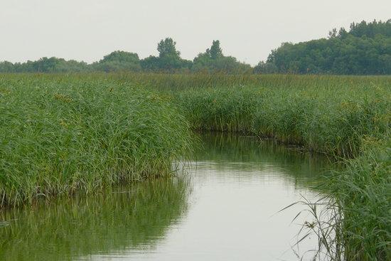 Balades en bateau - Gite du Maudit Francais: balade dans les marais