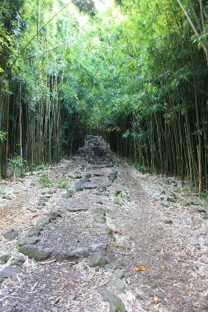 Ohe'o Gulch: Bamboo Forest