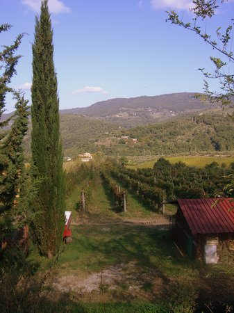 Ars Opulenta Tours: the view from the first vineyard