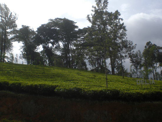 One Of The Coldest Place In Sri Lanka Review Of Nuwara
