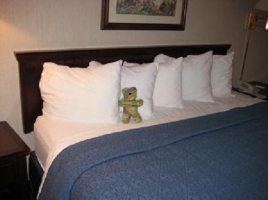 Quality Inn Schaumburg : mein Begleiter auf dem Bett in Zimmer 315