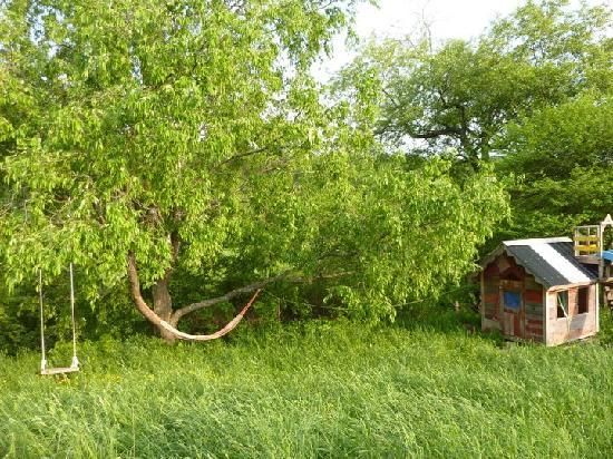 Stony Creek Farmstead: A relaxing hammock or nice swing from the tree brings back the simple life at Stony Creek Feathe