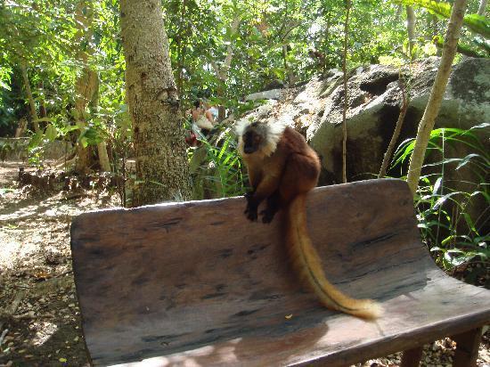 Villa Valiha: Lemuri