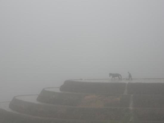 Yangshuo County, Çin: mysterious Longji--Karen's favorite