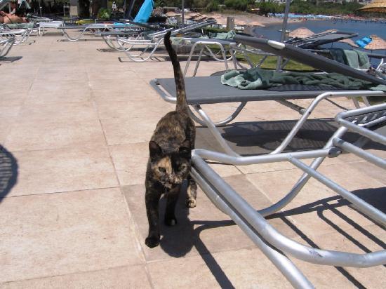 Ortakent, Turkije: gatti randagi in zono piscina e ristorante
