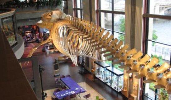 Grand Rapids, MI: Museum1