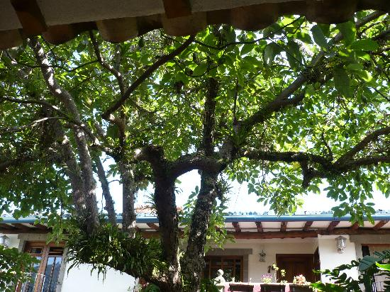 Posada Casa Sol: The famous avocado tree